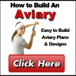 How to Build an Avaiary